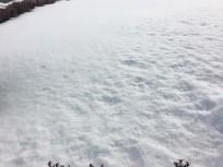 20160129青森の雪